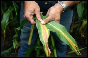 Nitrogen Deficiency, Crop-Tech
