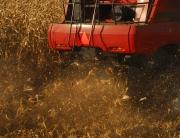 2015 Harvest